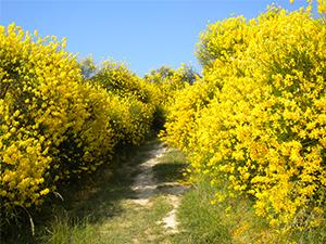 Marche, Parco naturale Monte San Bartolo
